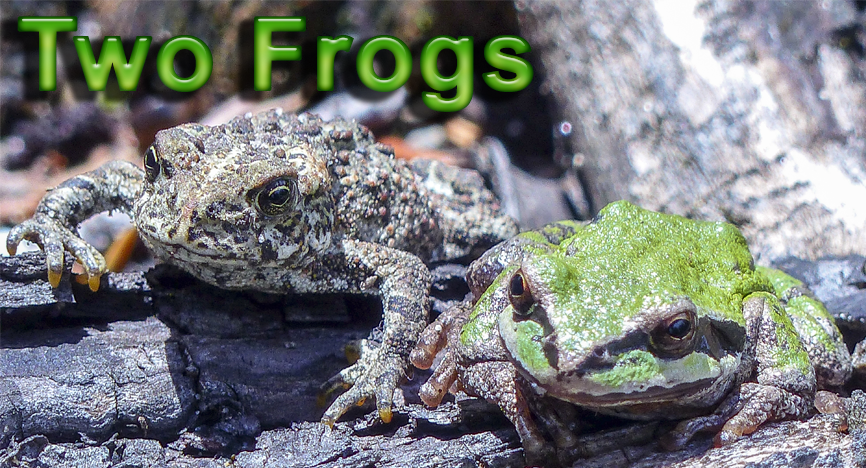 Two Frogs: a story on dealing with discouraging words